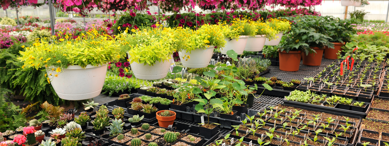 Cheap garden nurseries near me